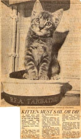 Tarbatness Cat